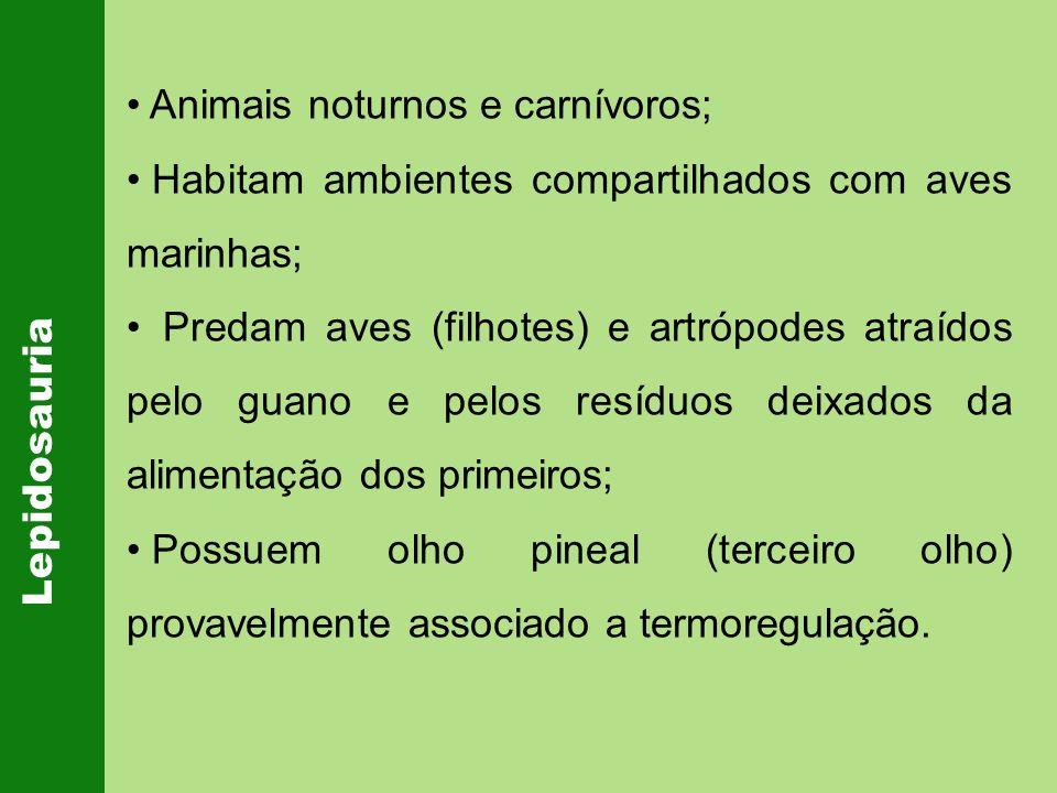 Animais noturnos e carnívoros;