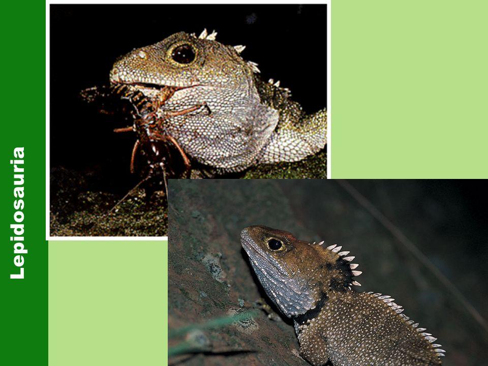 Lepidosauria