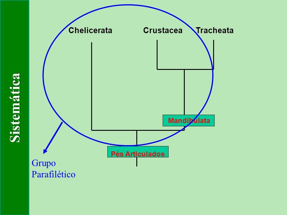 Sistemática Grupo Parafilético Chelicerata Crustacea Tracheata