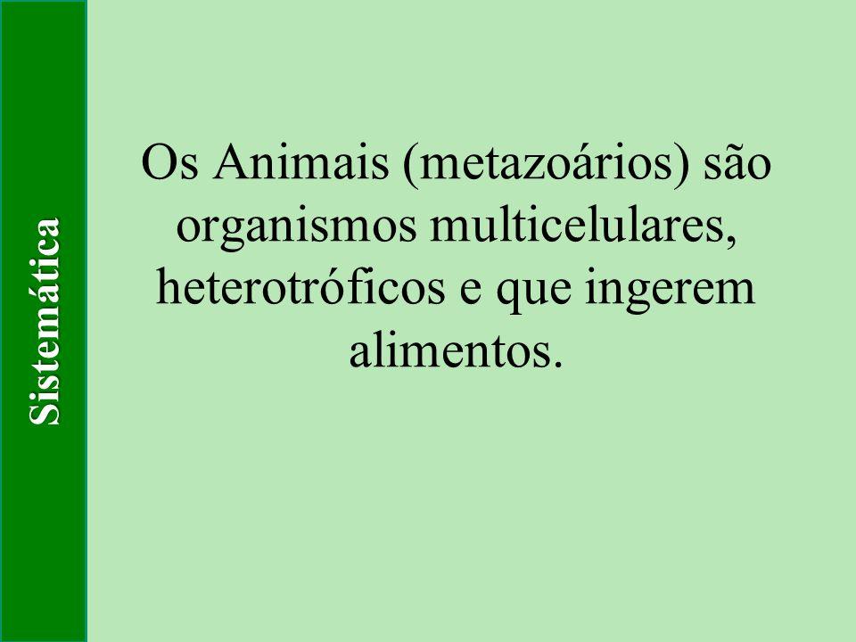 Sistemática Os Animais (metazoários) são organismos multicelulares, heterotróficos e que ingerem alimentos.