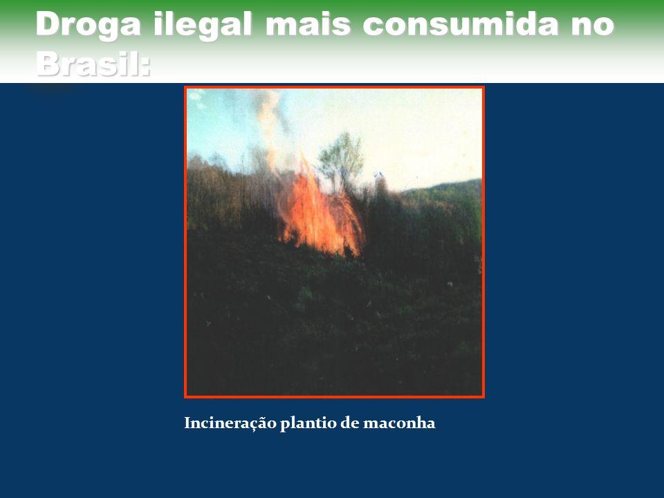 Droga ilegal mais consumida no Brasil:
