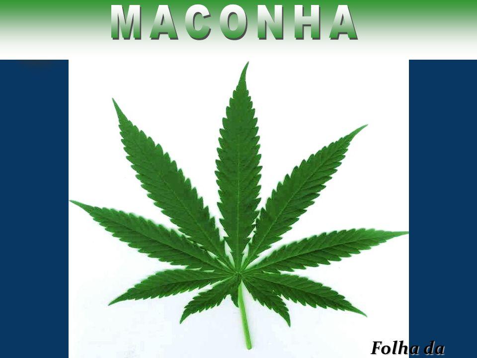 MACONHA Folha da Maconha
