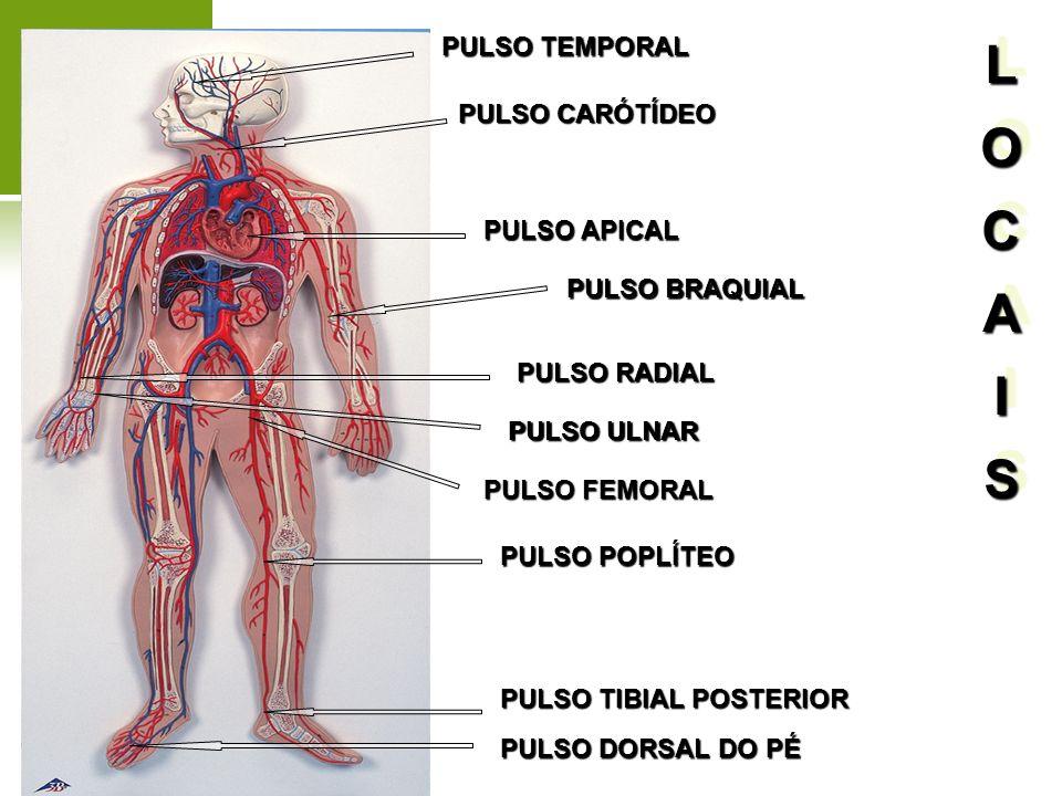 L O C A I S PULSO TEMPORAL PULSO CARÓTÍDEO PULSO APICAL PULSO BRAQUIAL