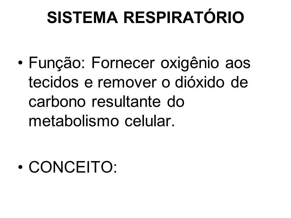 SISTEMA RESPIRATÓRIO Função: Fornecer oxigênio aos tecidos e remover o dióxido de carbono resultante do metabolismo celular.