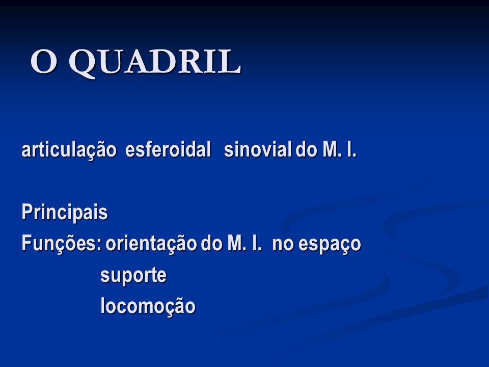 O QUADRIL articulação esferoidal sinovial do M. I