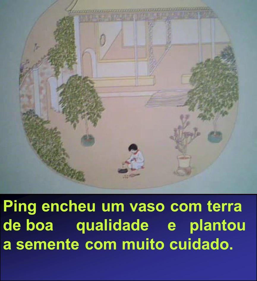 Ping encheu um vaso com terra de boa qualidade e plantou a semente com muito cuidado.