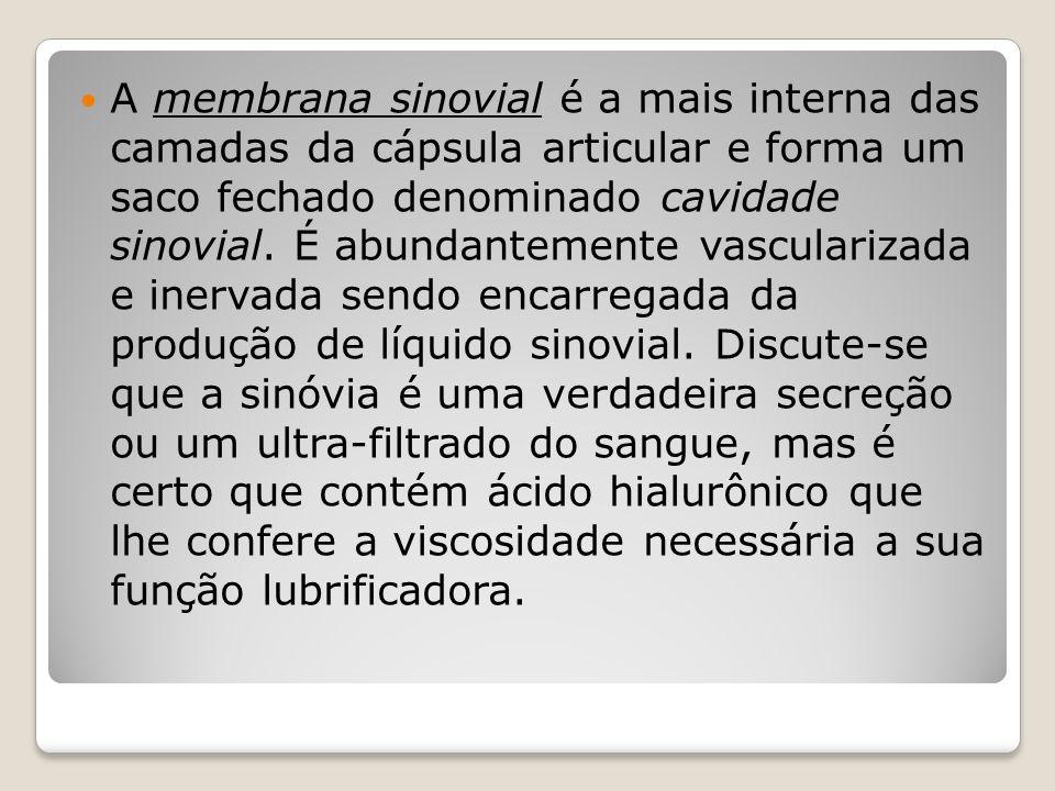 A membrana sinovial é a mais interna das camadas da cápsula articular e forma um saco fechado denominado cavidade sinovial.