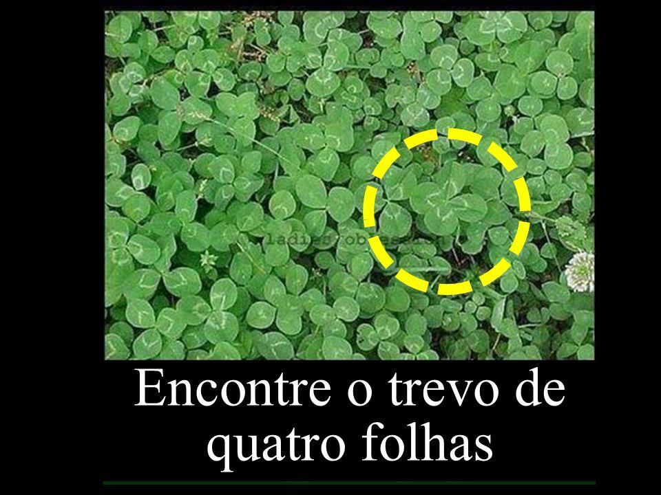 Encontre o trevo de quatro folhas