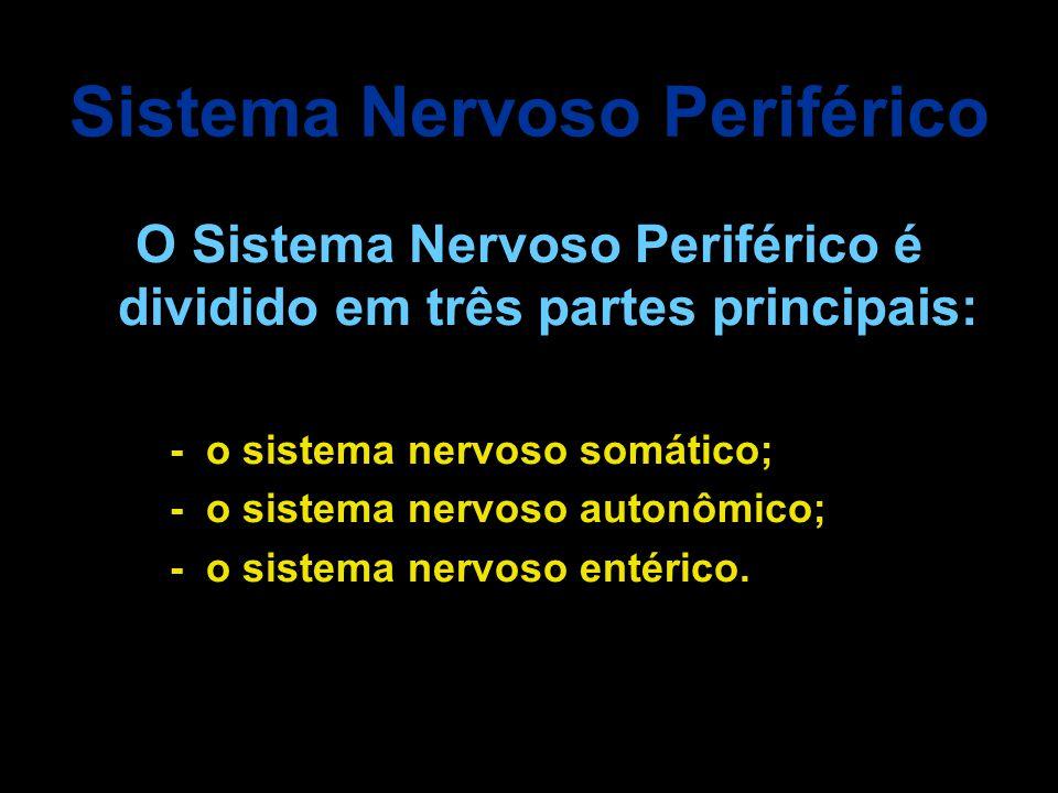 Sistema nervoso ppt carregar for O osso esterno e dividido em
