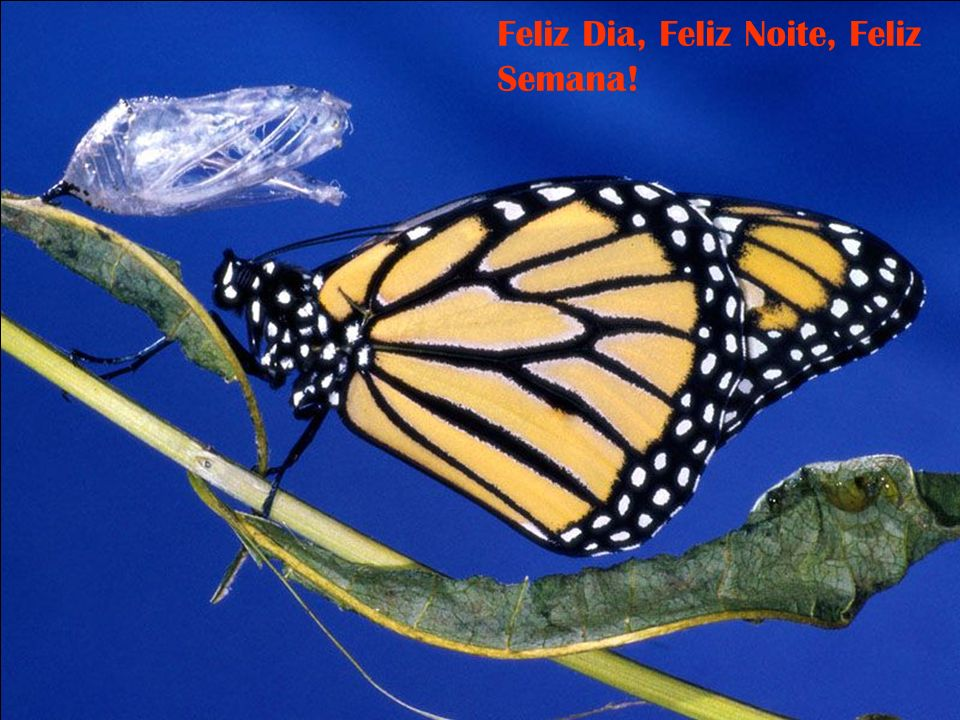 Feliz Dia, Feliz Noite, Feliz Semana!