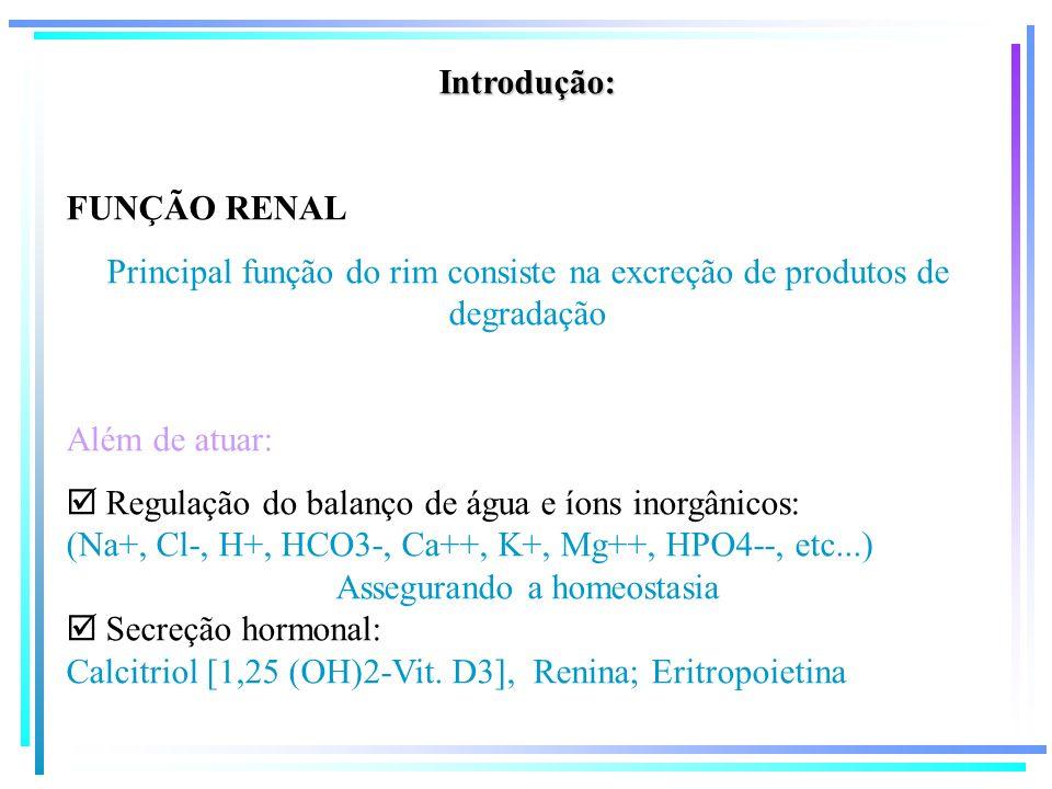 Principal função do rim consiste na excreção de produtos de degradação