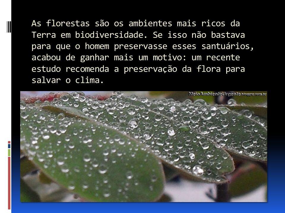 As florestas são os ambientes mais ricos da Terra em biodiversidade