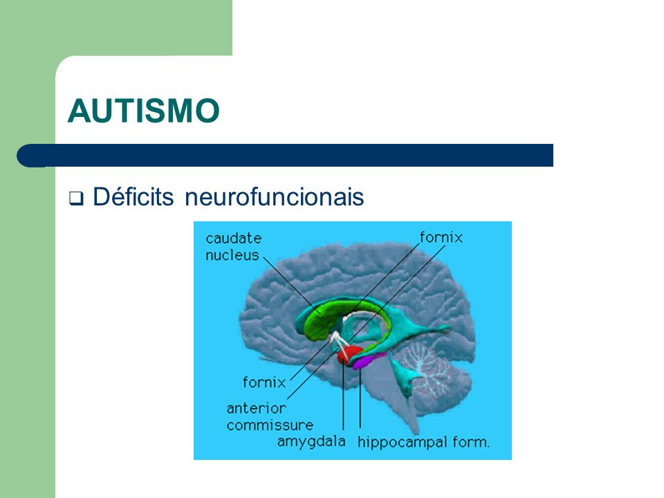 AUTISMO Déficits neurofuncionais
