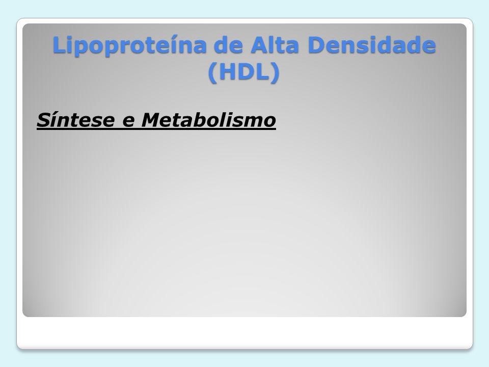 Lipoproteína de Alta Densidade (HDL)