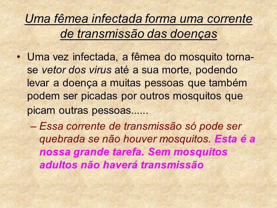 Uma fêmea infectada forma uma corrente de transmissão das doenças