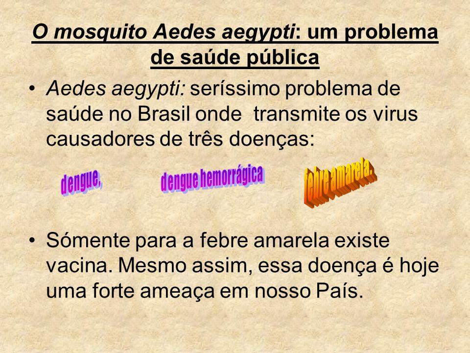 O mosquito Aedes aegypti: um problema de saúde pública