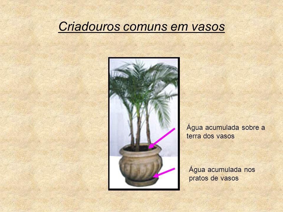 Criadouros comuns em vasos
