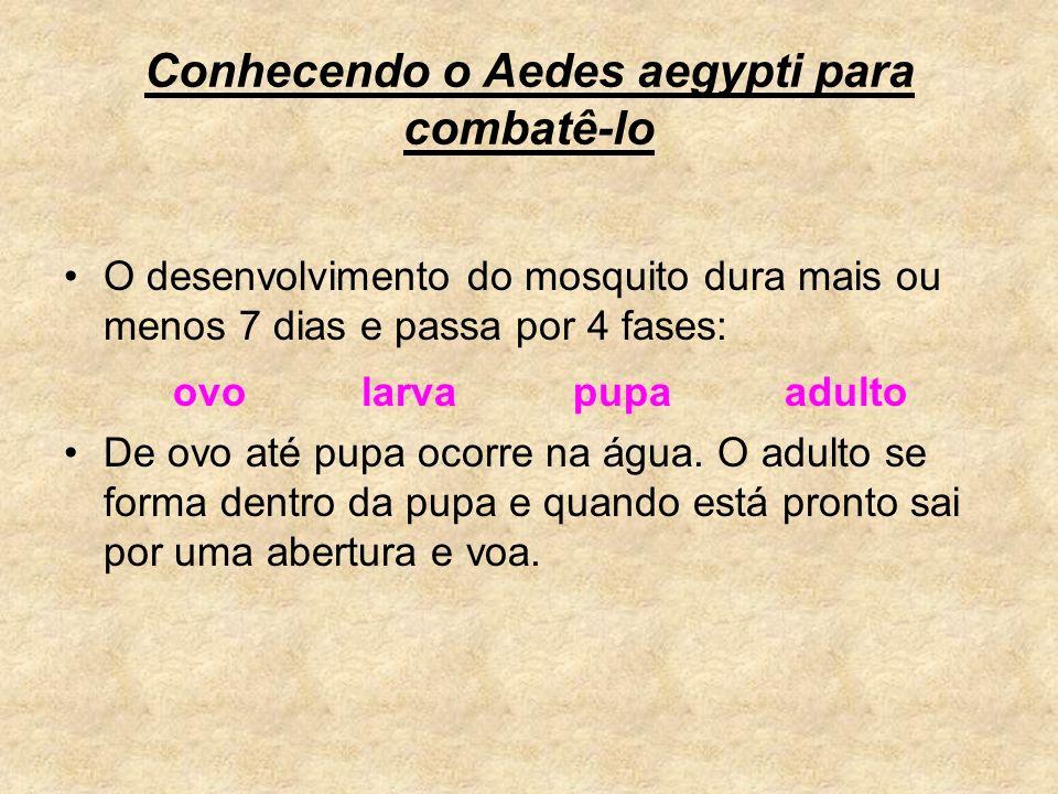 Conhecendo o Aedes aegypti para combatê-lo