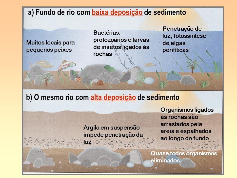 a) Fundo de rio com baixa deposição de sedimento