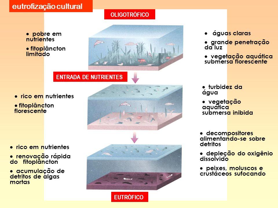 eutrofização cultural