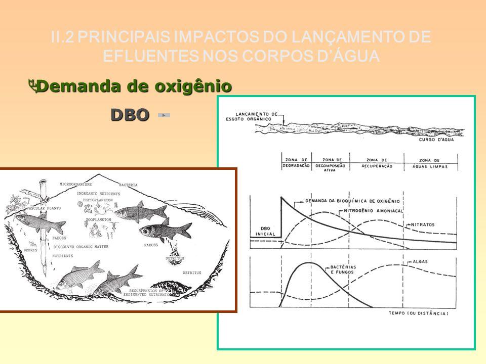 II.2 PRINCIPAIS IMPACTOS DO LANÇAMENTO DE EFLUENTES NOS CORPOS D'ÁGUA