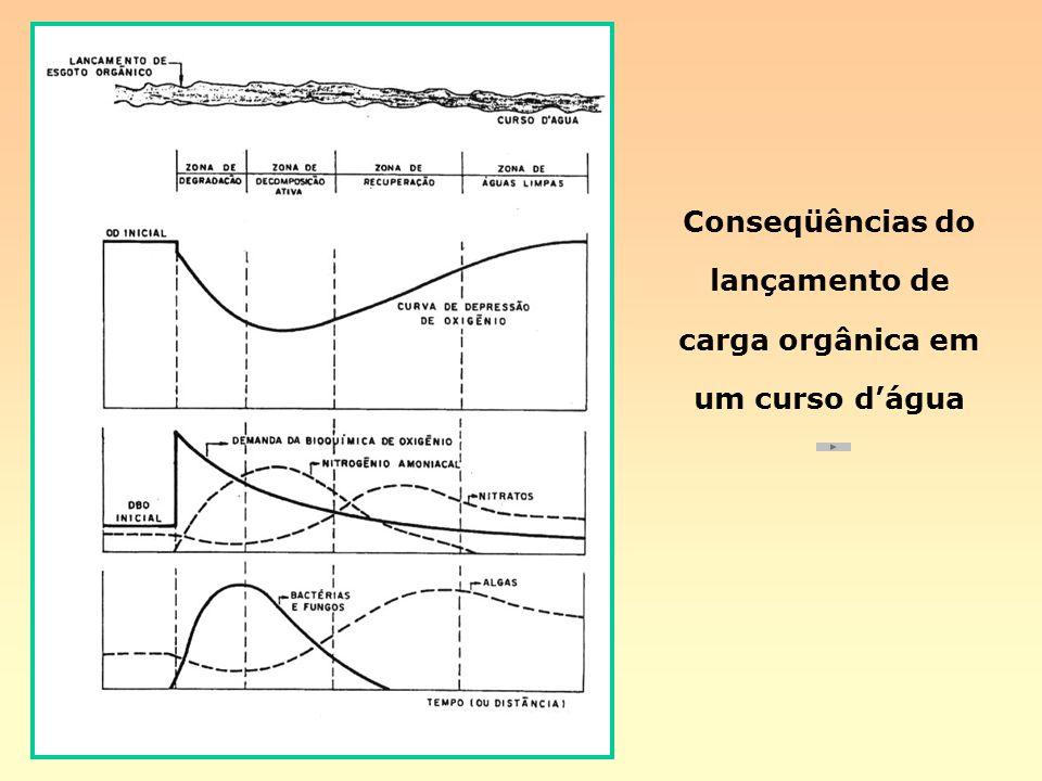 Conseqüências do lançamento de carga orgânica em um curso d'água
