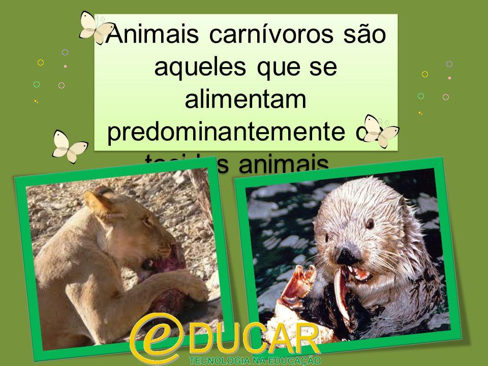 Animais carnívoros são aqueles que se alimentam predominantemente de tecidos animais.