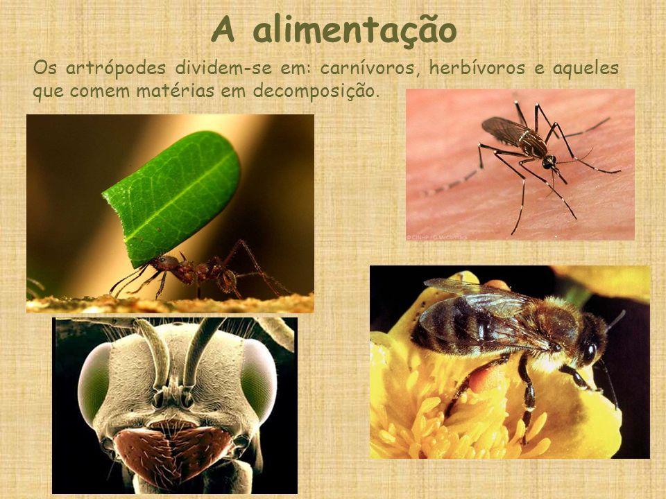 A alimentaçãoOs artrópodes dividem-se em: carnívoros, herbívoros e aqueles que comem matérias em decomposição.