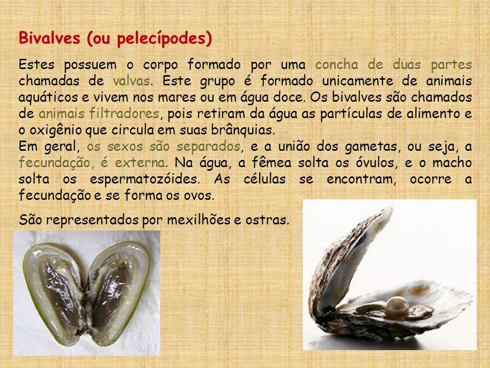 Bivalves (ou pelecípodes)