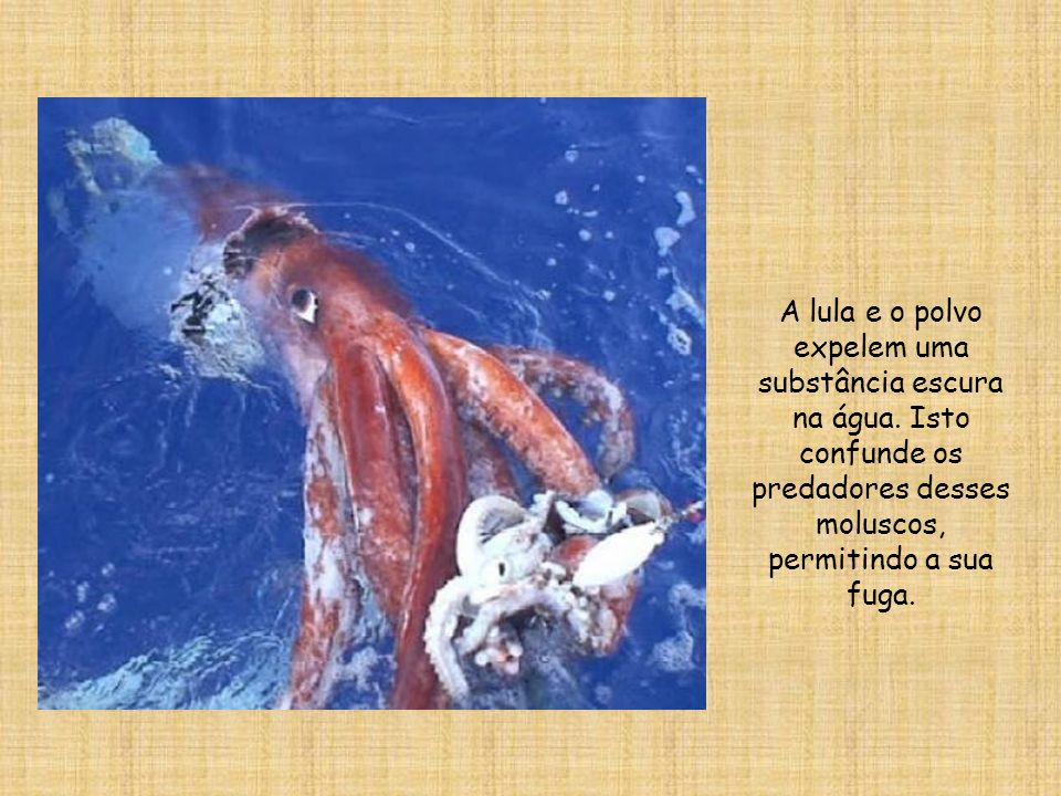 A lula e o polvo expelem uma substância escura na água
