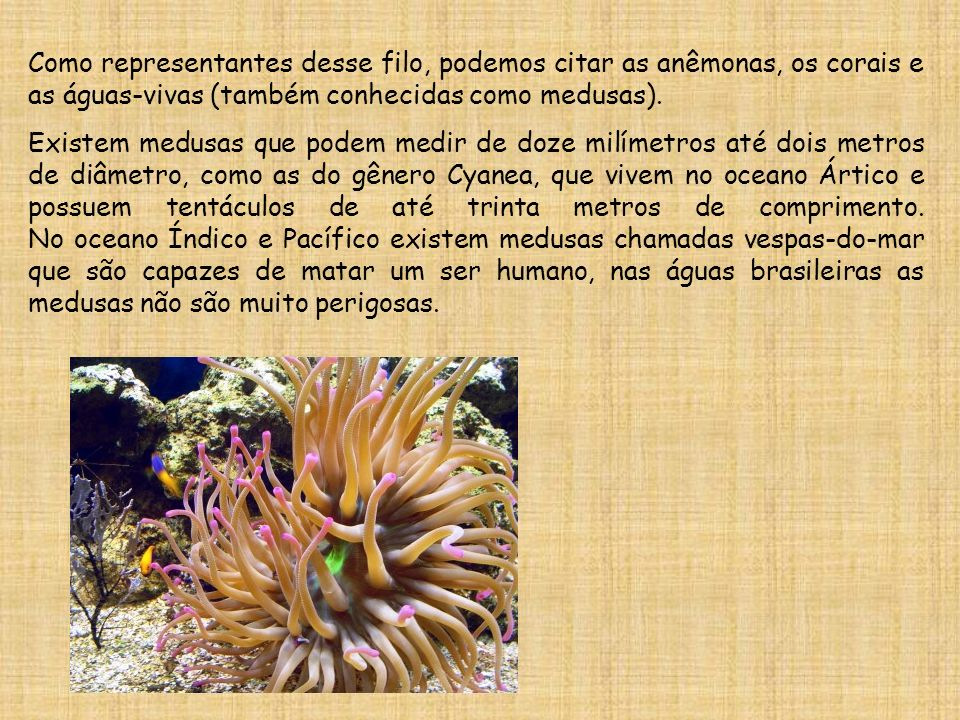 Como representantes desse filo, podemos citar as anêmonas, os corais e as águas-vivas (também conhecidas como medusas).