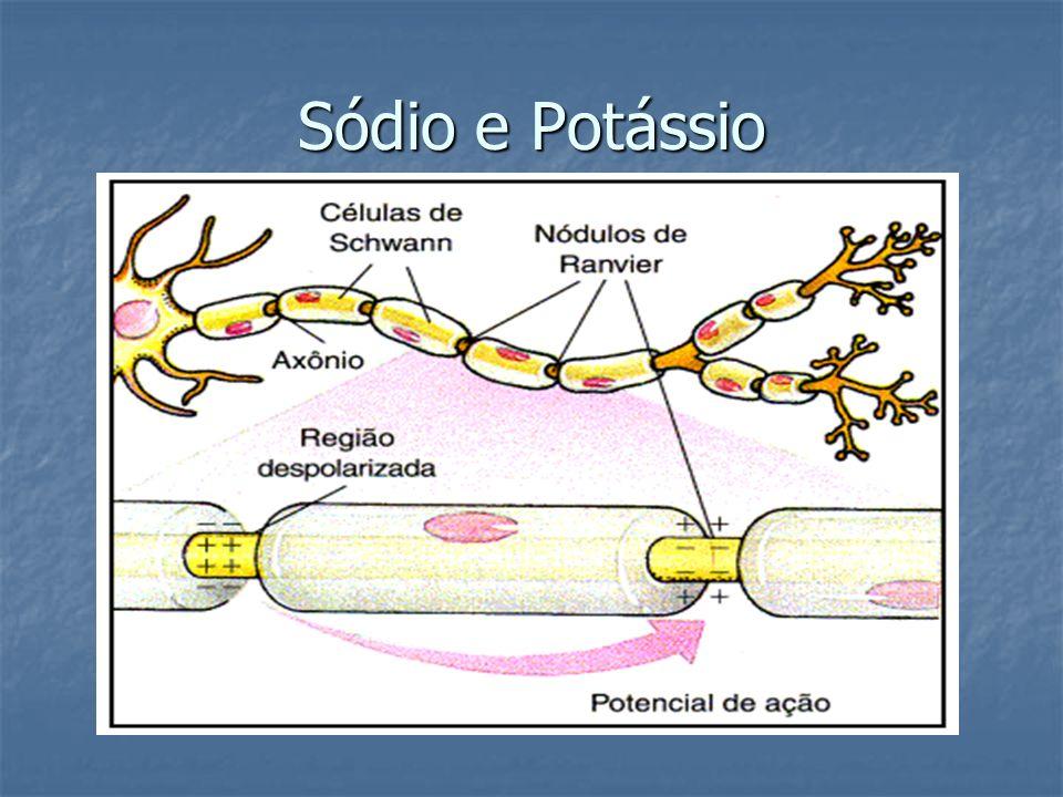 Sódio e Potássio