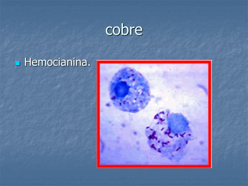 cobre Hemocianina.