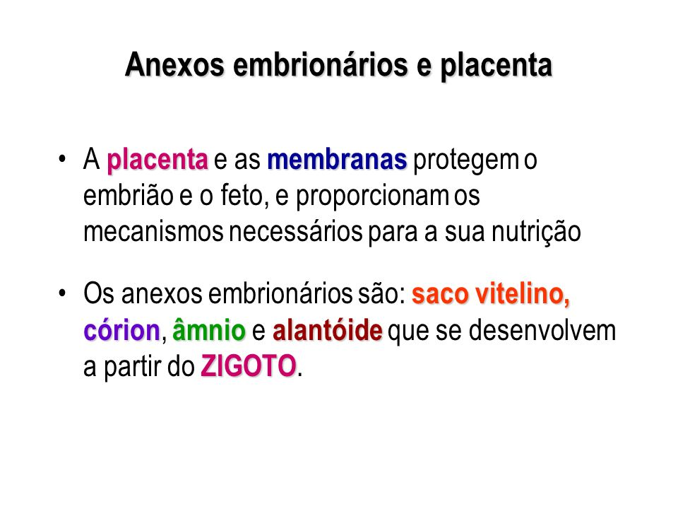 Anexos embrionários e placenta