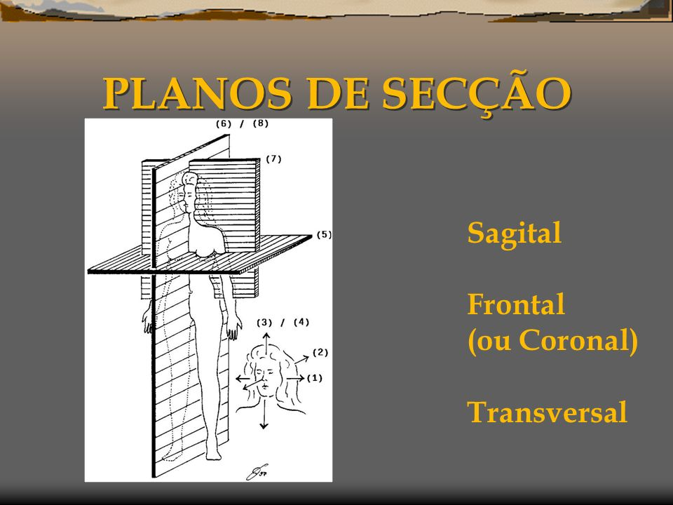 PLANOS DE SECÇÃO Sagital Frontal (ou Coronal) Transversal