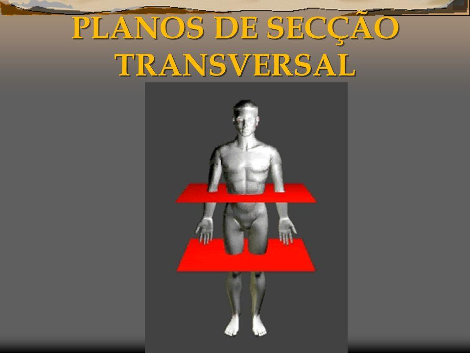 PLANOS DE SECÇÃO TRANSVERSAL
