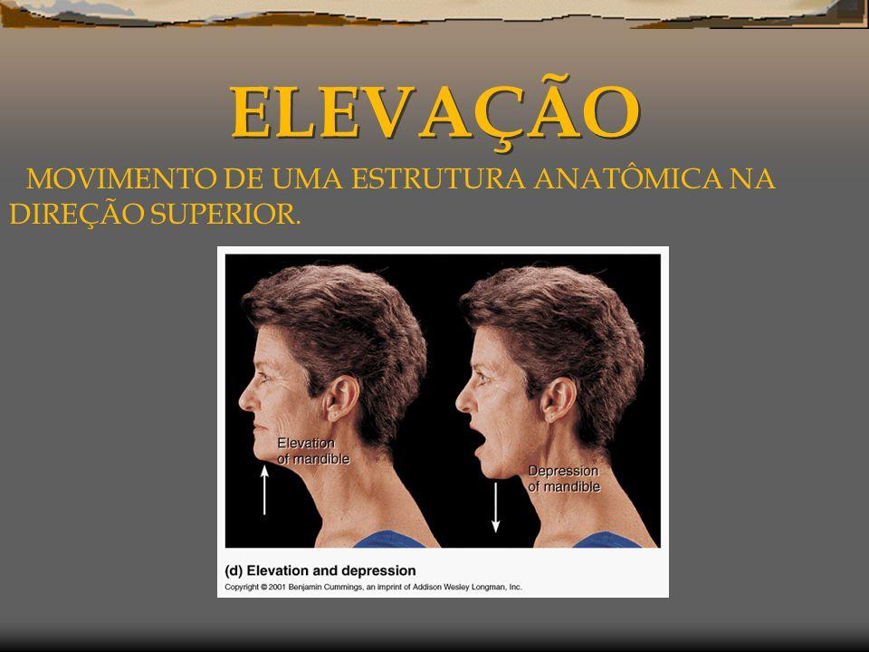 ELEVAÇÃO MOVIMENTO DE UMA ESTRUTURA ANATÔMICA NA DIREÇÃO SUPERIOR.