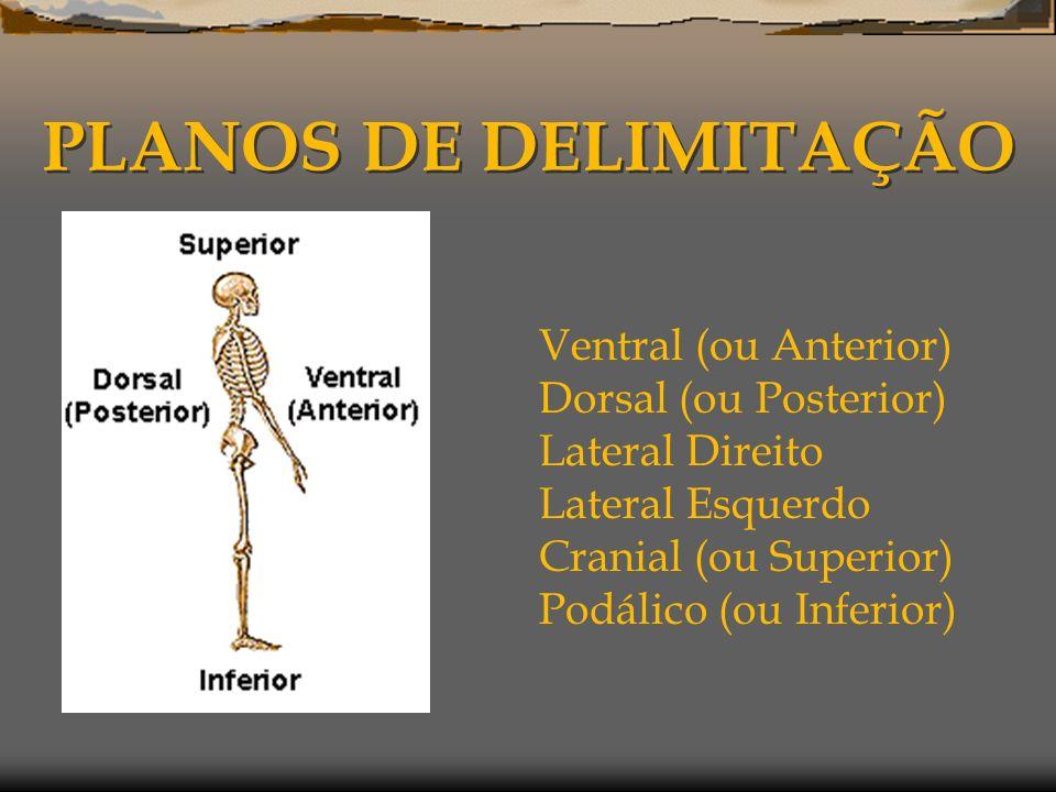 PLANOS DE DELIMITAÇÃO Ventral (ou Anterior) Dorsal (ou Posterior)