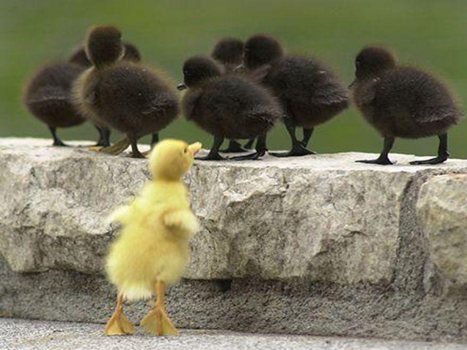 É tentar ser superior, Não ouvir a razão, Não ver que a diferença Está na cor, não no coração…