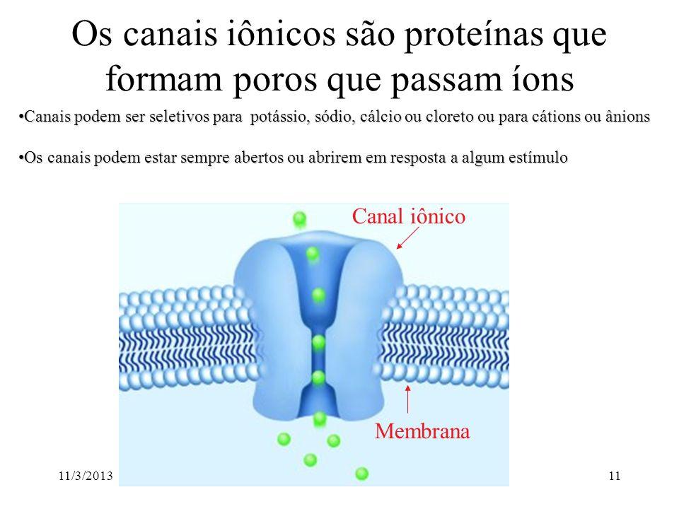 Os canais iônicos são proteínas que formam poros que passam íons