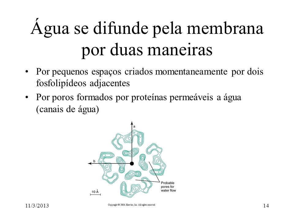 Água se difunde pela membrana por duas maneiras