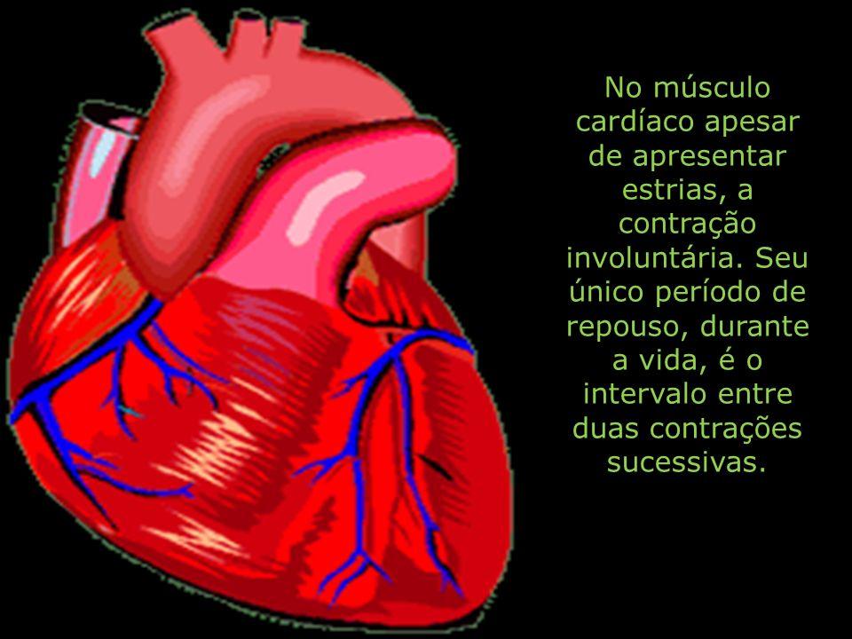 No músculo cardíaco apesar de apresentar estrias, a contração involuntária.