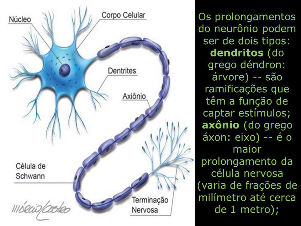 Os prolongamentos do neurônio podem ser de dois tipos: dendritos (do grego déndron: árvore) -- são ramificações que têm a função de captar estímulos; axônio (do grego áxon: eixo) -- é o maior prolongamento da célula nervosa (varia de frações de milímetro até cerca de 1 metro);