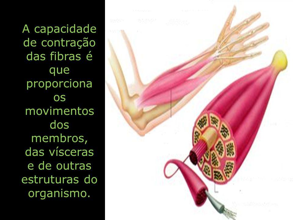 A capacidade de contração das fibras é que proporciona os movimentos dos membros, das vísceras e de outras estruturas do organismo.
