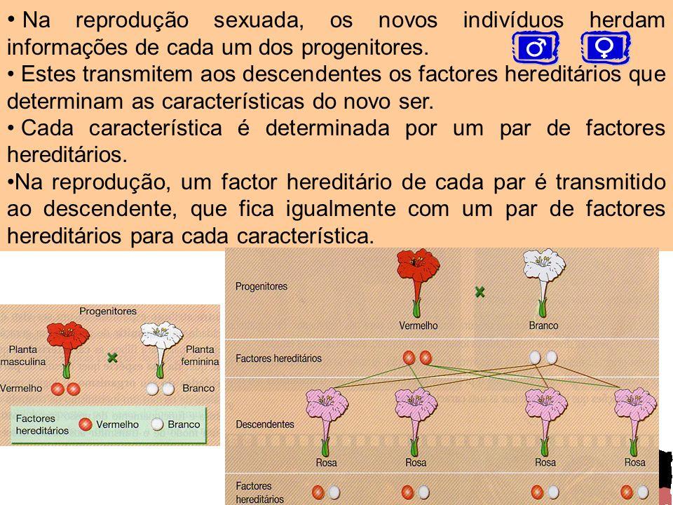 Na reprodução sexuada, os novos indivíduos herdam informações de cada um dos progenitores.