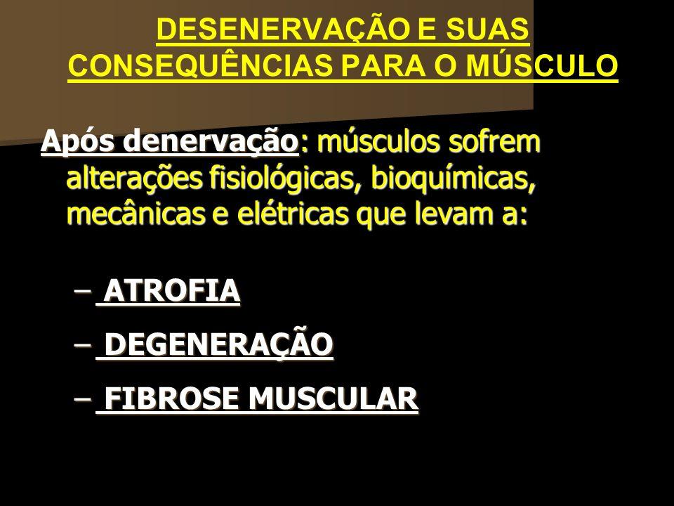 DESENERVAÇÃO E SUAS CONSEQUÊNCIAS PARA O MÚSCULO