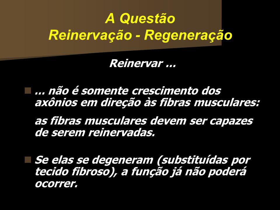 A Questão Reinervação - Regeneração