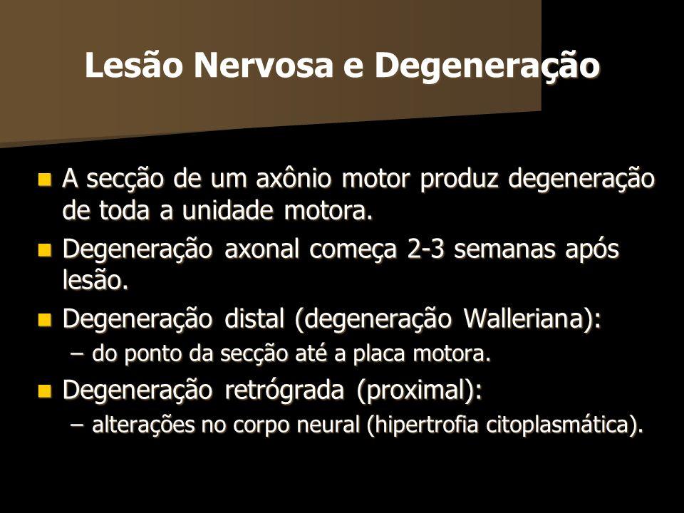 Lesão Nervosa e Degeneração