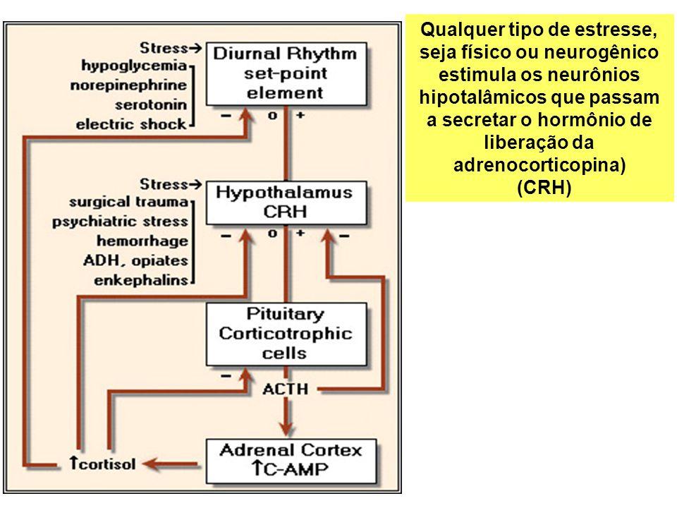 Qualquer tipo de estresse, seja físico ou neurogênico estimula os neurônios hipotalâmicos que passam a secretar o hormônio de liberação da adrenocorticopina)