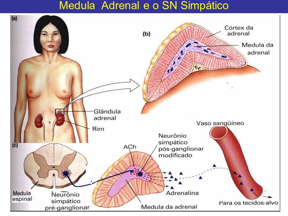 Medula Adrenal e o SN Simpático